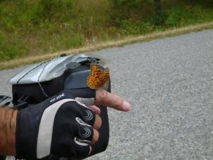 Buterfly 3
